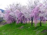 河川公園.jpg