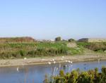 川鵜と鷺.jpg