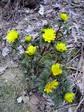 庭の春.JPG