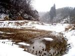 冬の田.jpg