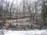 冬の林.jpg