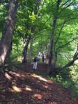 木漏れ日の登山道.jpg